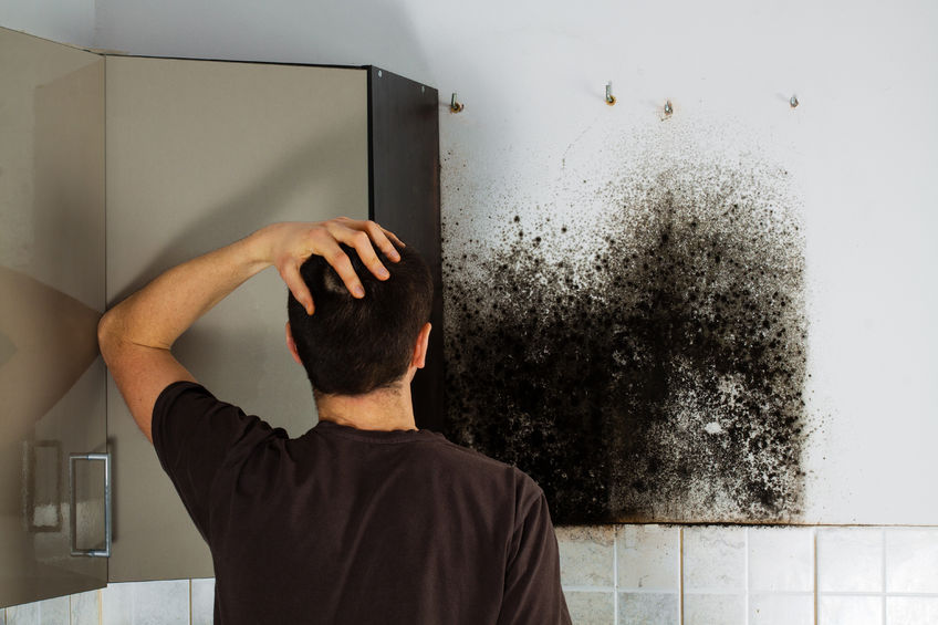 51674192 - man shocked to mold a kitchen cabinet.